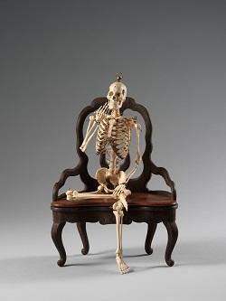 ⑤人体骨格